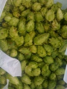 Preserve all the flavor of American hops with a quick extract ale.