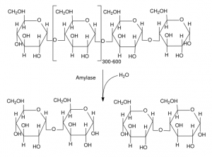 Amylase_reaction